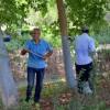 Parklarda Ağaçlar Kireçlendi