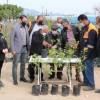 """Kozan Belediyesi """"Kamkat Fidanı"""" Üretimine Başladı"""
