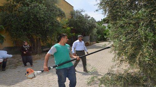 Ağlıboğaz Mahallesi'nde Yol Kenarlarındaki Ağaçlar Budandı