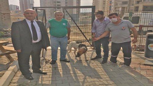 Kozan Belediyesi tarafından Kısırlaştırma Çalışması Başlatıldı