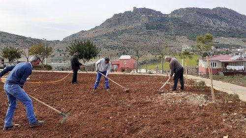 Kozan Belediyesi Kışlık Çiçek Dikimine Başladı