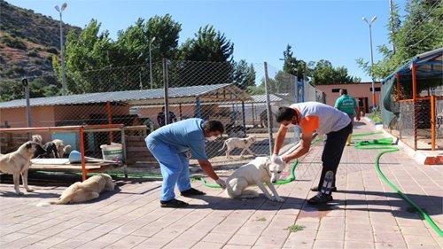 Kozan'da Sokak hayvanlarına kısırlaştırma çalışması