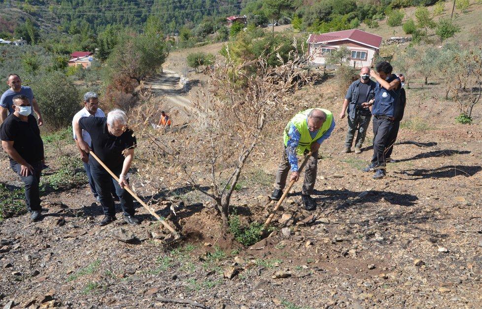 Yangının Vurduğu Kozan'da Zeytinliklere Kompostu Can Verecek